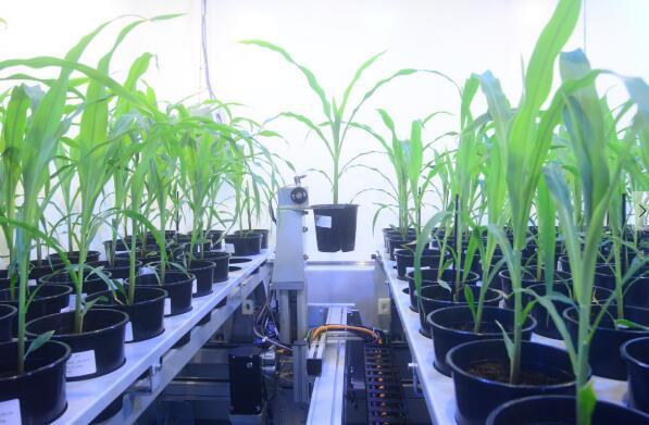 称重、成像、浇水植物表型成像系统