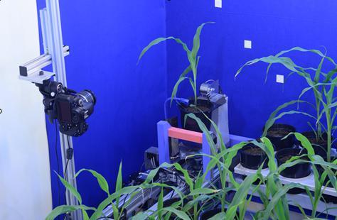 称重、成像、浇水植物表型成像系统图
